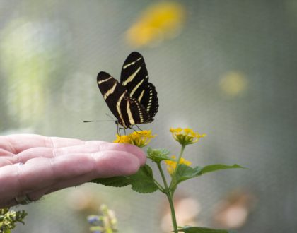 Nouvelles de Rillieux… Le respect de la Création