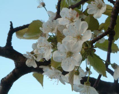 Retour sur les Veillées de printemps