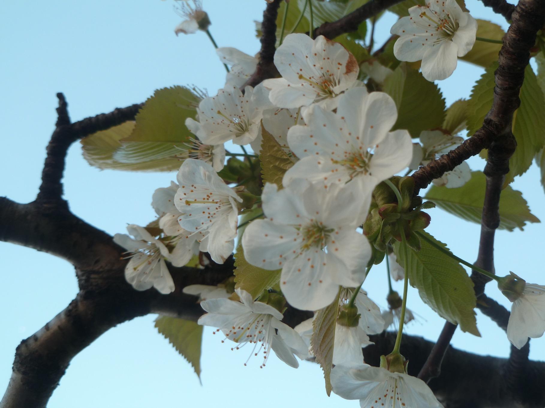 Les Veillées de printemps
